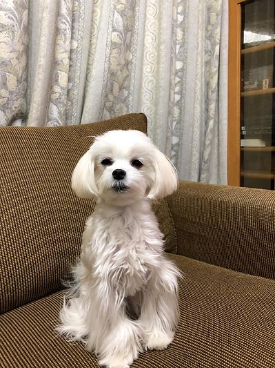 犬1.png