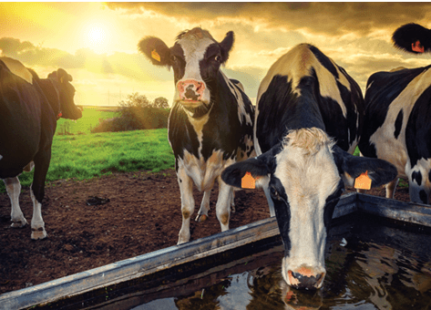 Water treatment for Dairy Farms in New Zealand