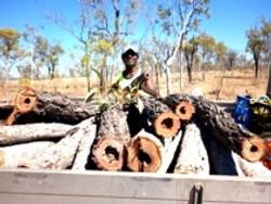 Didgeridoo logs