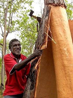 Aboriginal Bark artist removes bark from tree
