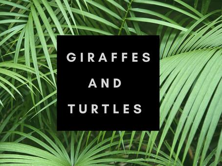 A giraffe and a turtle…
