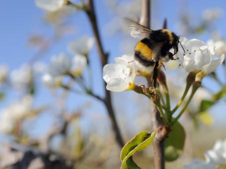 Biodiversiteit onder de loep