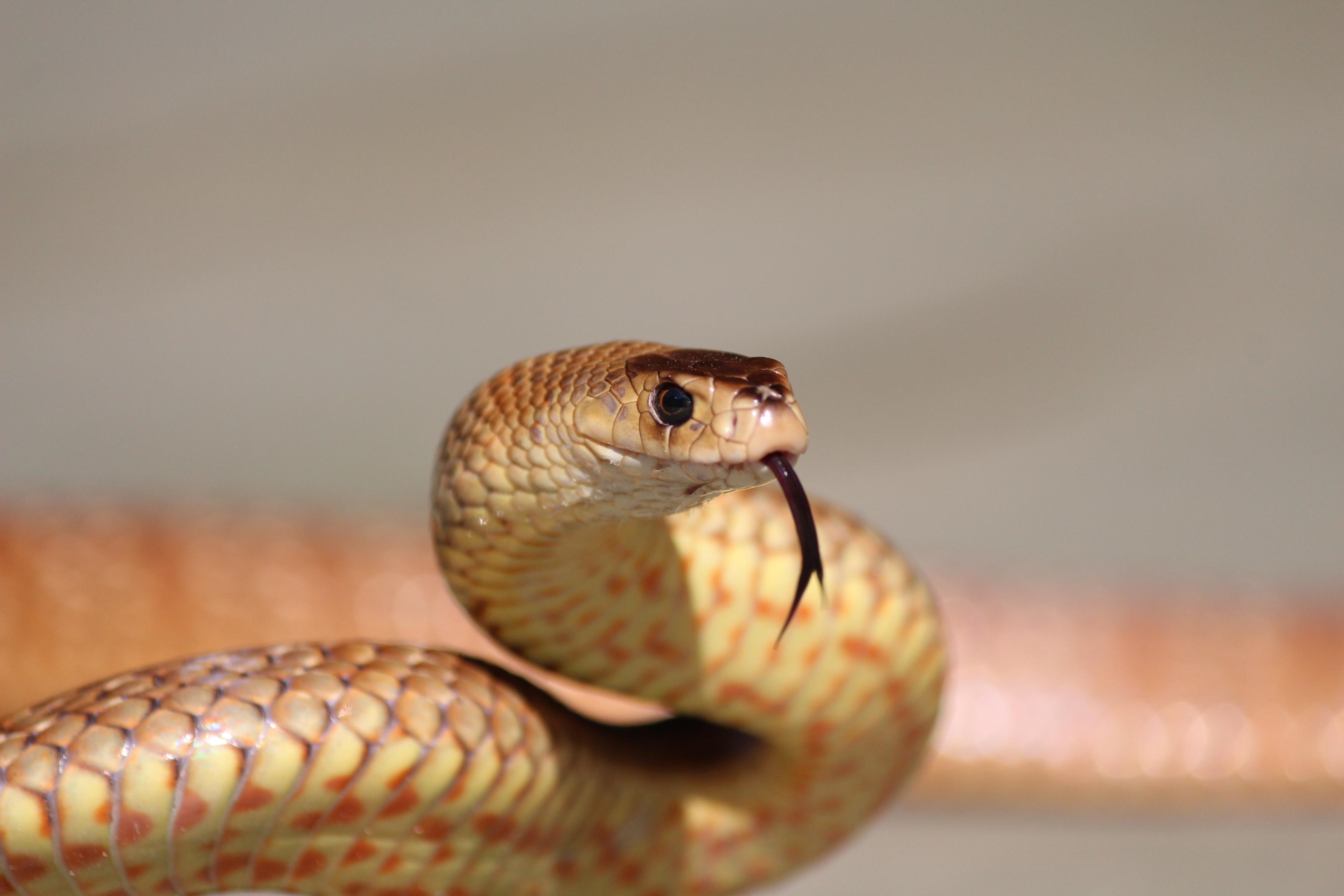 2 Day Venomous Snake Relocation Course