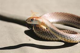 Snake9.jpg