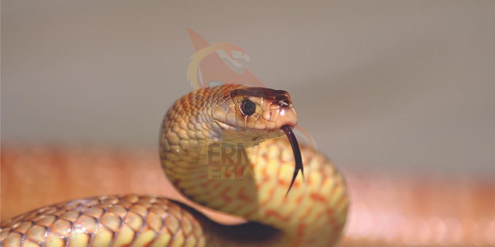 POSTPONED - Venomous Snake Relocation Course