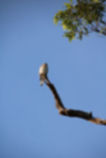 bird, flying, animal, widlife