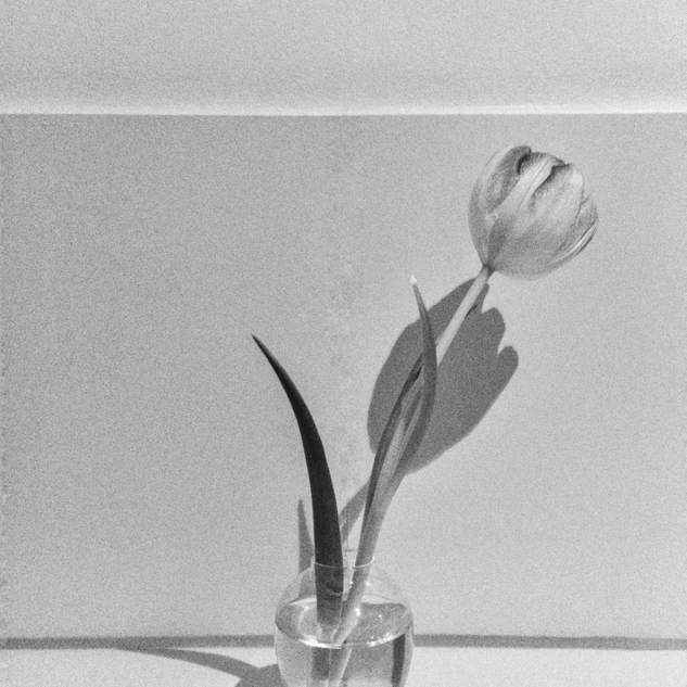 Tulip_In_Vase.PNG