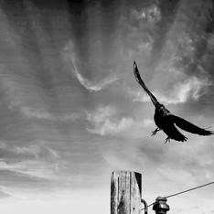 Raven's Landing