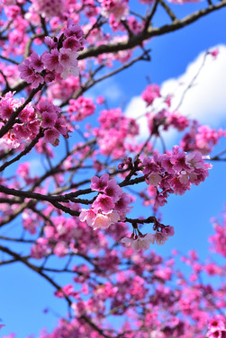 LET PEACE BLOSSOM