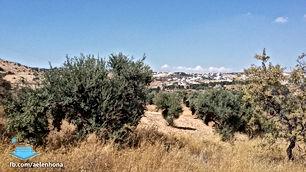 ارض للبيع في وادي السير/ ابو السوس - تبعد 850م عن طريق الصناعة