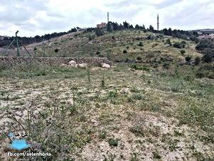 ارض للبيع في جلعد/ النابلسية - مقابل معصرة جلعاد الرومانية