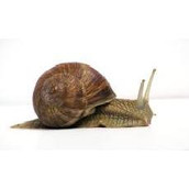 The beauty of snails