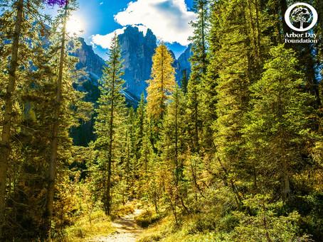 "Stoneweg US Announces ""Green"" Partnership with Environmental Champion Arbor Day Foundation"