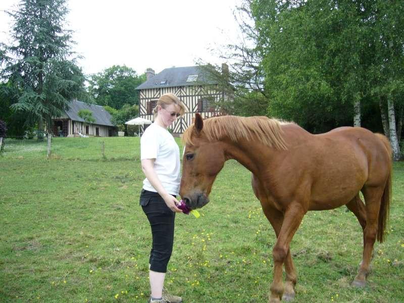 chevaux maison (1)-800