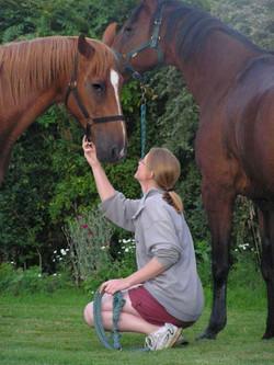 New Horserizons