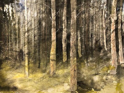 Watercolor ( Original ) 40x30cm Skog i Medelpad  oramad 2021