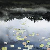 Waterlilies Ångermanland