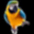 El Mundo parrot