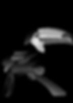 toucan-vector-art.png