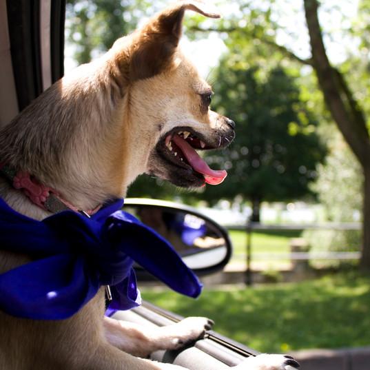 Les Mordus services canins _ Promeneurs,