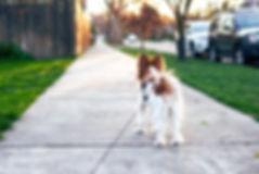 dog-4259565_1920.jpg
