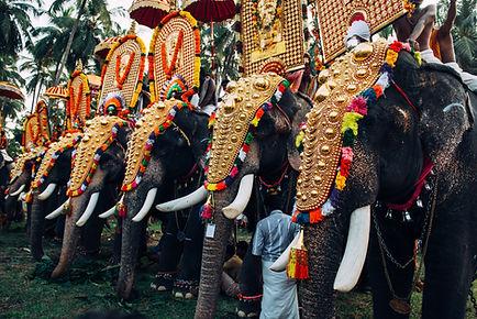 Festival do elefante na Índia