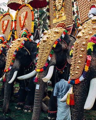 Elephant Festival in India