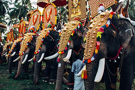 Elephant Festival in Indien