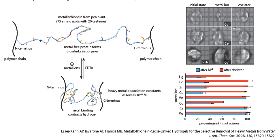 Water remediation using protein-polymer hybrids