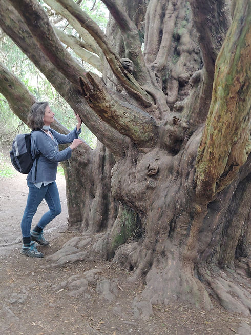 Carol and giant yew Kingely Vale 140421.