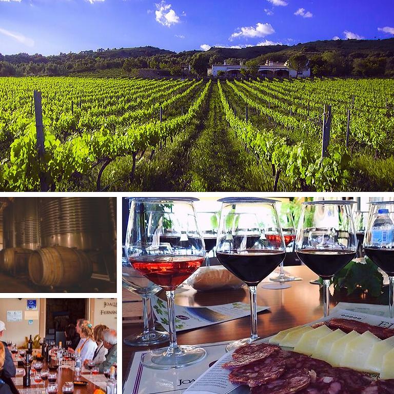 Dagsutflykt till ekologisk vingård i Rondatrakten