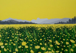 SOLD Buttercups in Langdale