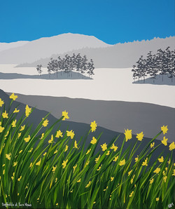 SOLD Daffodils at Tarn Hows