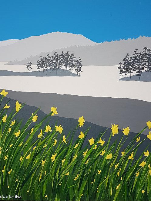 Daffodils at Tarn Hows