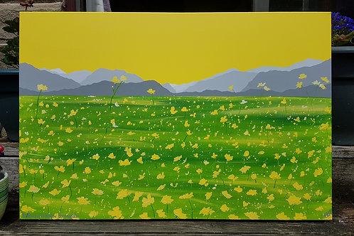 Buttercup Meadow, Borrowdale