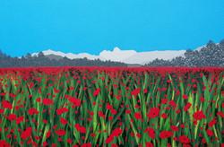 SOLD Poppies in Langdale