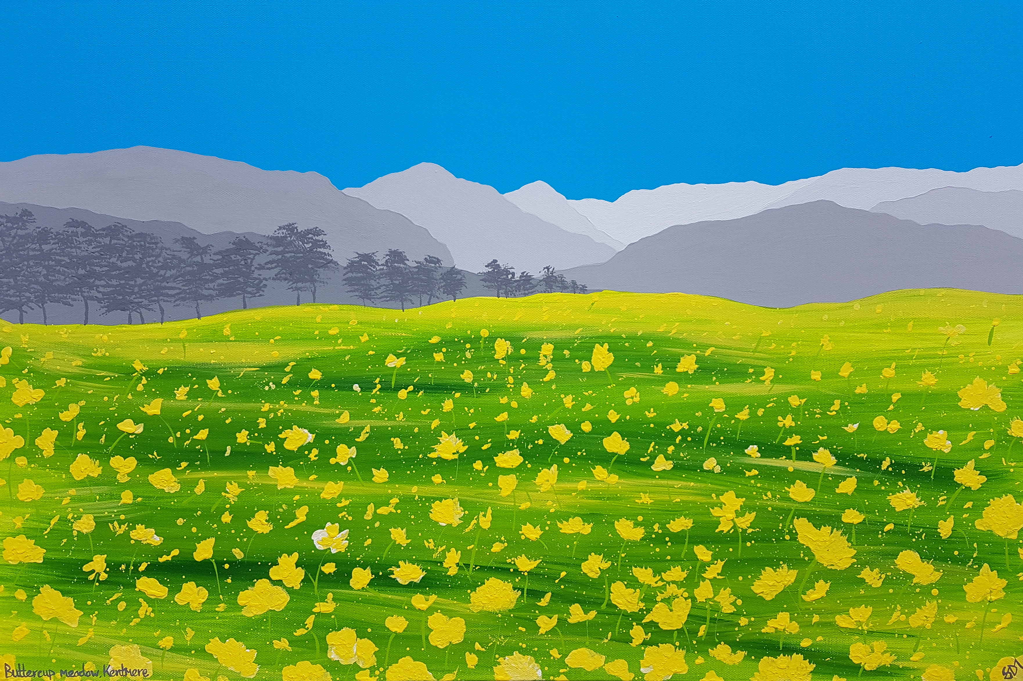 Buttercup meadow, Kentmere