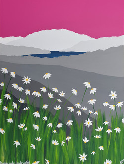 Daisies under Loughrigg Fell