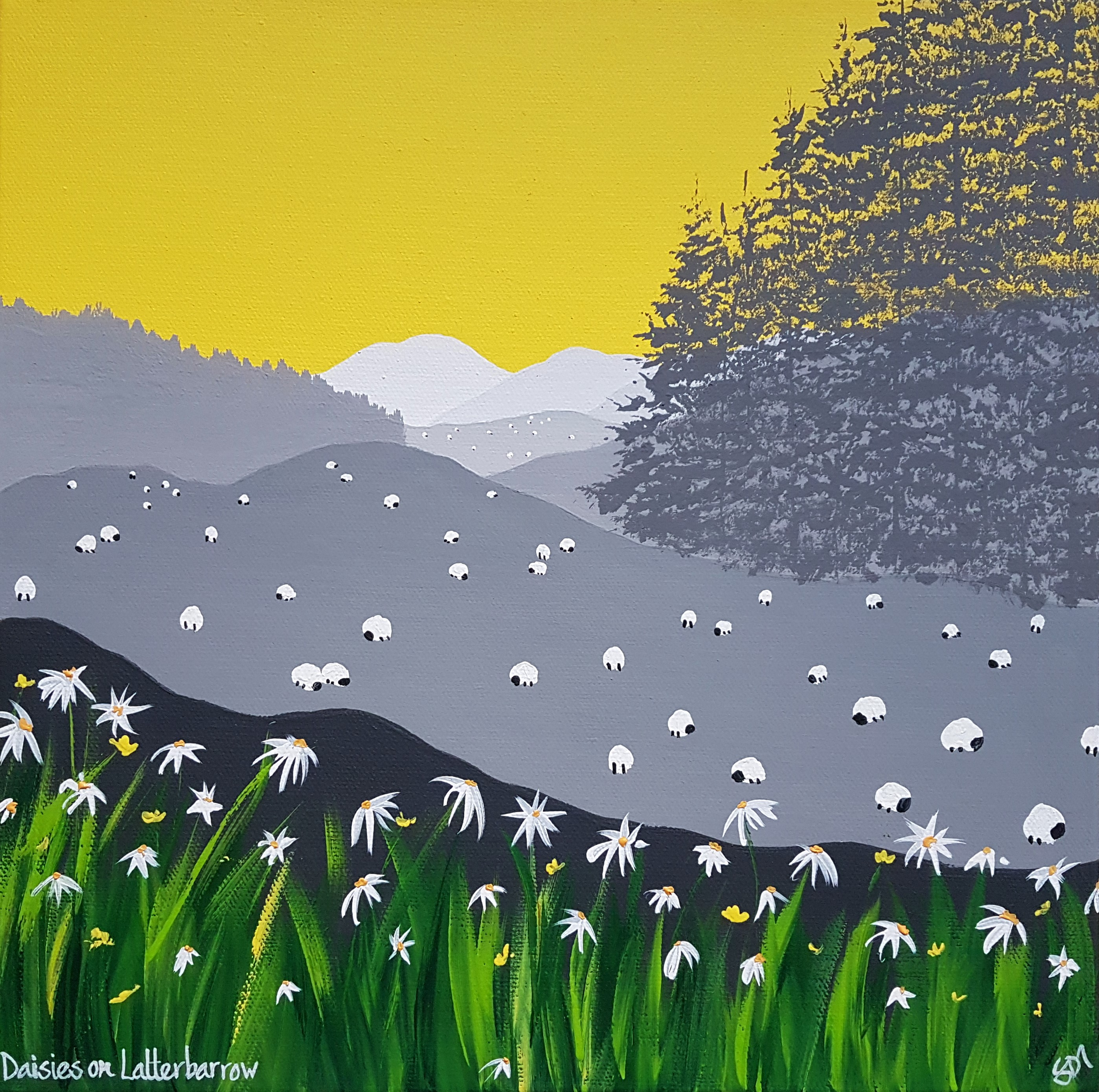 SOLD Daisies on Latterbarrow