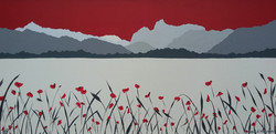 Poppies at Windermere