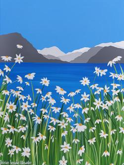 Daisies beside Ullswater