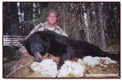 T-Dreier-Bear-04.jpg