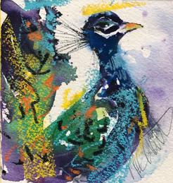 Peacock Watercolor