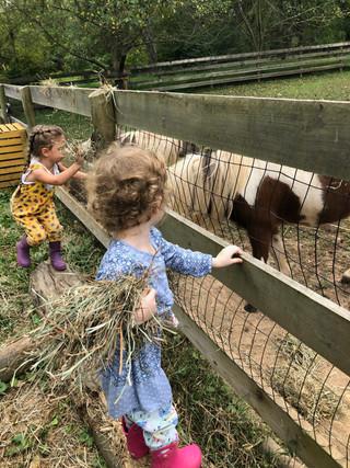 Feeding Ponies.jpeg