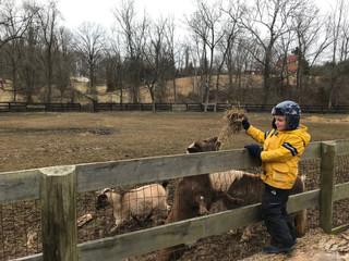 Feeding Goats.jpeg