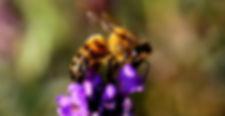 bee-1040521_1920.jpg
