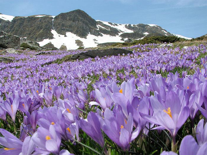 saffron-farm-mountain.jpg