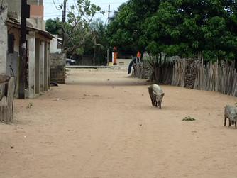 Senegalese stop