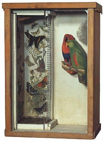 Joseph Cornell, Untitled, (Parrot _ Butt