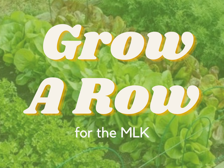Seedlings started? 🌱 Will you grow a row for the MLK?